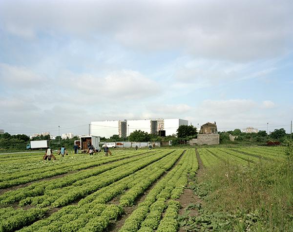 Vue des Archives nationales depuis un champ agricole, Pierrefitte-sur-Seine, 17 mai 2011