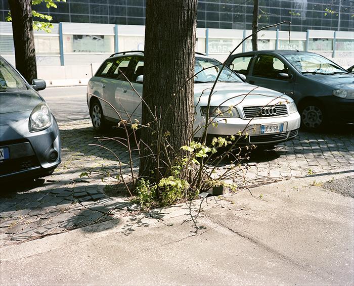 Un albero e delle automobili all'EUR, Roma, 2014